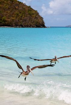 Maho Bay - Virgin Island National Park - St. John - United States Virgin Island  (von johnhayes5032)