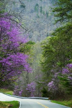 Spring and Redbuds in bloom in The Great Smoky Mountains
