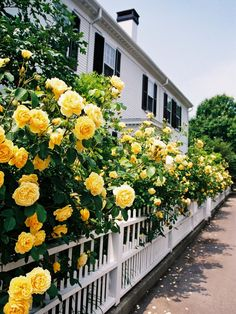 This is so pretty. Love the yellow roses along the fence.