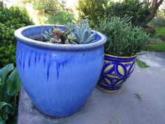 My blue pots rock #bluepottery #succulents #waterwisegardening #californiadrought by speedgrip2001 #waterwise #waterwisegardening #drought #droughttolerant