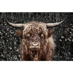 Nachic Wall - Animal Canvas Wall Art Highland Cow Picture Print on Canvas Cattle Painting for Modern Living Room Bedroom Farmhouse Home Decor Gallery Wrap Ready to Hang Vincent Van Gogh, Highland Cow Pictures, Fluffy Cows, Canvas Wall Art, Canvas Prints, Highland Cattle, Cow Art, Tier Fotos, Animal Sketches