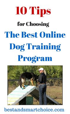 Become a better dog owner and train your dogs at home. Check out these tips for choosing the best online dog training program. Click here ---> http://bestandsmartchoice.com/2015/09/online-dog-training-program/