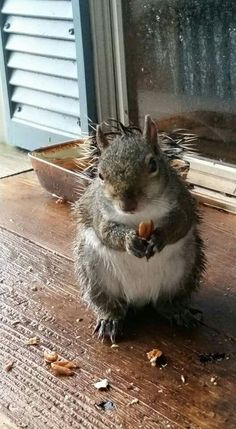 The food's a bit soggy from the rain. Oh, I'm not complaining, it's still tasty. By the way, I could use a towel if you don't mind.