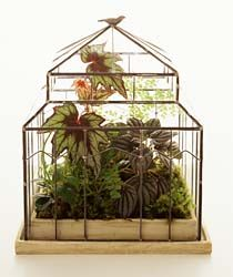 Great terrarium plants- the new dollhouse for girls...ehhh I mean women:-)