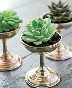 Rustic Succulent Centerpieces, I would add a little something pretty around the succulents but I love the idea