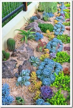 Gorgeous planting pattern for succulents – 1 year after planting. Succulents and… Gorgeous planting pattern for succulents – 1 year after planting. Succulents and More: Revisiting Sue's succulent garden Pin: 305 x 447 Succulent Landscaping, Succulent Gardening, Cacti And Succulents, Front Yard Landscaping, Planting Succulents, Landscaping Ideas, Succulent Rock Garden, Backyard Ideas, Organic Gardening