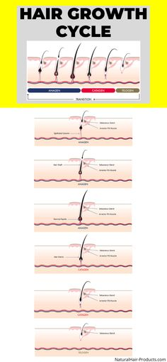 hair growth cycle anagen catagen telogen exogen Hair Growth Cycle, New Hair Growth, Healthy Hair Growth, Make Hair Grow Faster, How To Make Hair, Grow Hair, Black Hair Magazine, Club Hairstyles, Hair A
