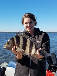 """Rosie with a 19"""" Sheepshead caught on 8lb braid in the marshes in late November near Hopedale, LA."""