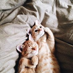 Today is Cuddly Kitten Day!😻 As if we needed another excuse to get all cuddly with our favorite furry friend. Cute Cats And Kittens, I Love Cats, Kittens Cutest, Orange Kittens, Ragdoll Kittens, Tabby Cats, Funny Kittens, Bengal Cats, Kitty Cats