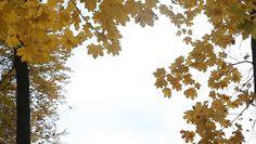 Risultati immagini per fico albero silhouette