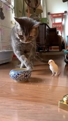 Animals And Pets Funny Cats Funny Cute Cats, Funny Birds, Cute Funny Animals, Cute Baby Animals, Cute Animal Videos, Funny Animal Pictures, Nature Animals, Animals And Pets, Video Chat