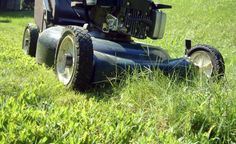 Grasmilben können auf dem Rasen massenhaft auftreten und verursachen mit ihrem Biss rötliche Pusteln, die tagelang jucken. Wir geben Tipps zur Bekämpfung der lästigen Spinnentiere