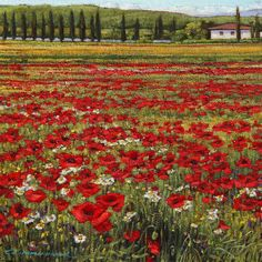Poppies in a Tuscan Breeze by Caroline Zimmermann