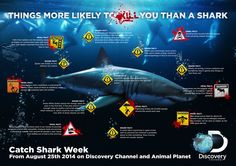 Discovery Shark Week Infographic