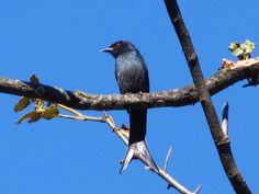 Jhilmil Jheel Conservation Reserve - in Uttarakhand, India