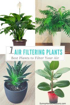 7 Best Indoor Plants To Filter Your Air
