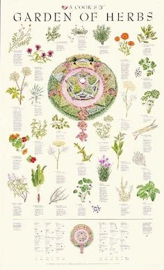 herb garden Posters - A Cooks Garden of Herbs Poster I own it and now it will finally have a home in my studio Healing Herbs, Medicinal Plants, Dream Garden, Witch's Garden, Rusty Garden, Garden Pallet, Herb Garden Design, Garden Kids, Garden Boxes