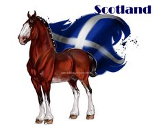 Horse Hetalia:  Scotland by MUSONART