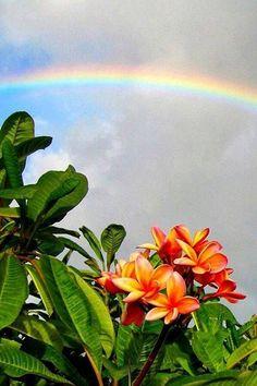 Plumerias and Rainbows
