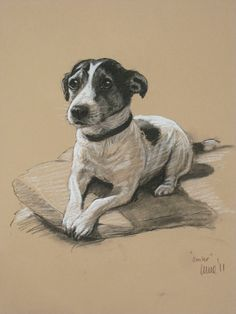 Lovely Jack Russell Terrier dog LE print by heatherirvinefineart, $24.50 Aww.... those eyes