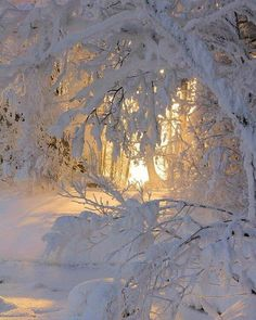 Love the light showing through the snowy tree branches