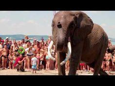A balatonlellei Napfény Strandot szállták meg cirkuszi elefántok.