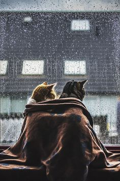 Rainy, chilly day together. Xo