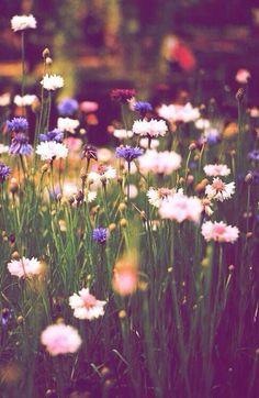 Paleta de Colores inspirada en flores silvestres, por Kind of Pretty Pretty Flowers, Wild Flowers, Flowers Nature, Summer Flowers, Meadow Flowers, Fresh Flowers, Field Of Flowers, Spring Wildflowers, No Rain No Flowers