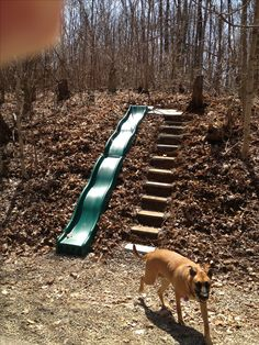 Hillside slide!!! Perfect for my backyard!! Where can I get a slide like this?!