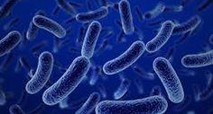 Las bacterias también pueden ser aliadas de nuestra salud -  Por el Dr. Fernando Burgos.  Somos lo que comemos, pero sobre todo somos las bacterias que tenemos. Si bien suelen ser tomadas como sinónimo de enfermedad, la mayor parte de los microbios son nuestros amigos, al menos los que viven dentro de nuestro intestino y en la superficie de nuestra ...