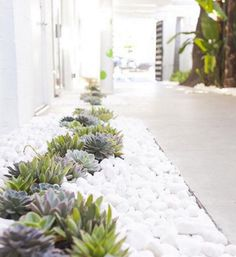 5 Inventive Cool Tricks: House Garden Ideas Life backyard garden design how to make.Landscape Garden Ideas Yards modern backyard garden back yard. Succulent Landscaping, Landscaping With Rocks, Front Yard Landscaping, Succulents Garden, Landscaping Ideas, Xeriscape, Growing Succulents, Succulent Garden Ideas, Backyard Ideas