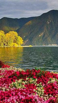 Wildflowers Natural Scenery, Beautiful Flowers, Paintings, Pretty Flowers