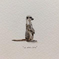 Lorraine Loots, Meerkat
