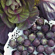 Rubine Brussels Sprouts: 85 days. An heirloom variety not often seen in the garden. Rubine offers up a bountiful harvest of gorgeous 1-1 1/2 inch purple-red sprouts that are full of wonderfully rich old-time flavor. A striking addition to any vegetable patch and a gourmet special for your table. Grows to 24 inches and performs best when planted early.