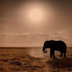 These silhouettes Don't know about you but for me it would be impossible to imagine a world without elephant, it is such an iconic creature.