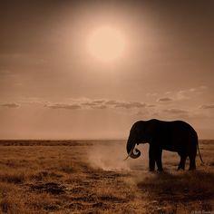 Elephant Sun, via Flickr.
