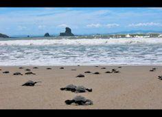Turtle run, Nicaragua