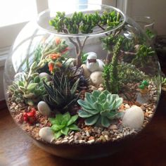 DIY Terrarium Succulents Picture Showing for Mini Succulents Garden Ideas DIY Succulent Plants - Garten