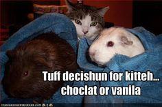 chocolate or vanilla . . .