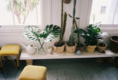 cheap plant stand