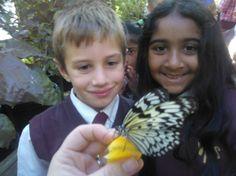 J1 & 2 butterfly tri