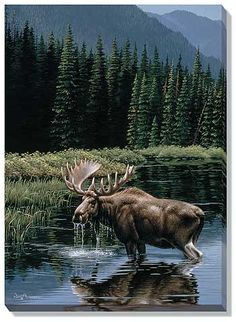 Northern Solitude-Moose Wrapped Canvas by Neal Anderson Moose Deer, Moose Hunting, Bull Moose, Deer Art, Moose Art, Hunting Art, Moose Pictures, Deer Photos, Scenery Pictures
