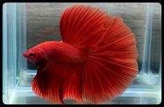 AquaBid.com - Deep Red 757.