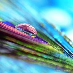 ❥ splash of color