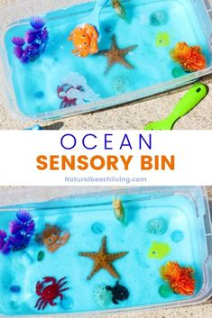 Sensory Activities For Preschoolers, Sea Activities, Animal Activities, Summer Activities For Kids, Hands On Activities, Preschool Activities, Sensory Bins, Sensory Play, Discovery Bottles