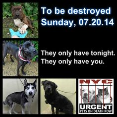 """URGENT!!! 4 BEAUTIFUL DOGS TO BE DESTROYED TOMORROW!!!!!Tonight's list is posted.. Please start sharing NOW!!! The shelter closes at 8pm. Go to the ACC website (http://www.nycacc.org/PublicAtRisk.htm) ASAP to adopt a PUBLIC LIST dog (noted with a """"P"""" on their profile) ..."""