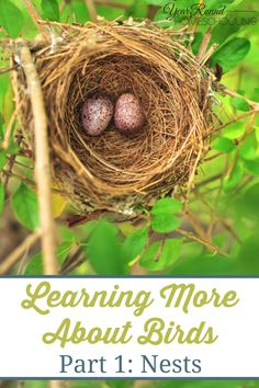 Learning More About Birds, Part 1: Nests - Year Round Homeschooling