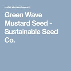 Green Wave Mustard Seed - Sustainable Seed Co.