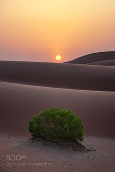 Emergence Taken in the Empty Quarter Desert on the border of Saudi Arabia and the UAE. @tachyeonz