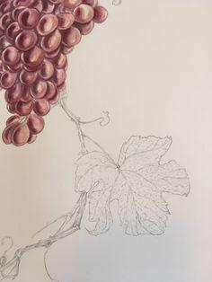 Sarah J. Loecker : Step by Step Grapes illustration Stamp Carving, Brush Type, Sarah J, Light Reflection, Urban Sketching, Botanical Illustration, Fun Projects, Overlays, Colours